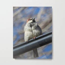 Finch on a wire Metal Print