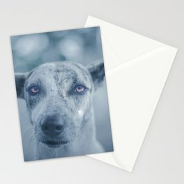 Perro Stationery Cards