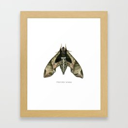 Pandora Sphinx Framed Art Print