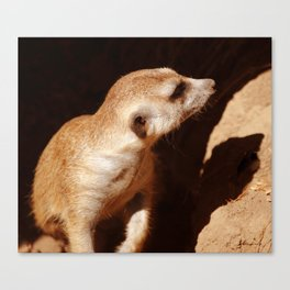 Meerkat and Shadow Canvas Print