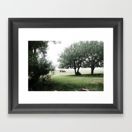horse in the distance Framed Art Print