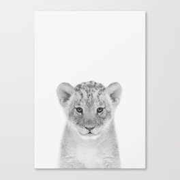 Baby Lion Canvas Print