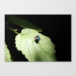Flies can be pretty too Canvas Print