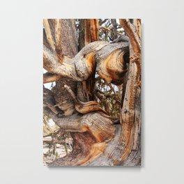 Bristlecone 5 Metal Print