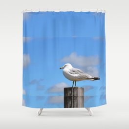 Seagull Bird Beach Art - Sitting Pretty - Sharon Cummings Shower Curtain