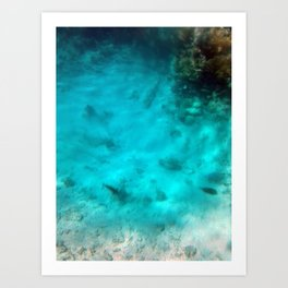 Underwater images on a reef in the red sea of Egypt Art Print
