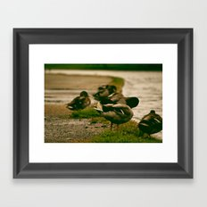 Duck Shy Framed Art Print