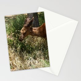 Mule Deer At Zion Park Stationery Cards