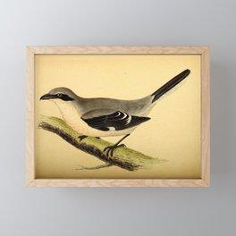 Vintage Print - A History of the Birds of Europe (1859) - Great Grey Shrike Framed Mini Art Print