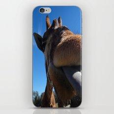 Giraffe lick iPhone & iPod Skin