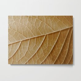 Sepia Leaf Veins Metal Print