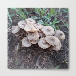 There Is A Fungus Among Us Brown Mushrooms Metal Print