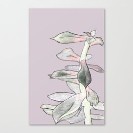 A Succulent With Crayons Canvas Print