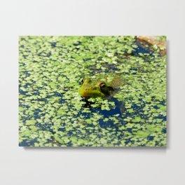 Sneaky Green Frog Metal Print