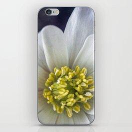 Anemone Macro iPhone Skin