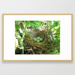 bird nest reloaded Framed Art Print