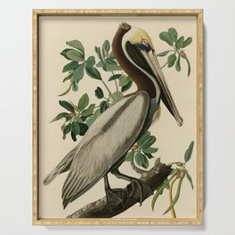 Brown Pelican, Birds of America by John James Audubon Serving Tray