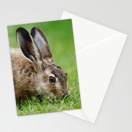 Lepus europaeus young hare Stationery Cards