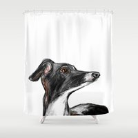 greyhound Shower Curtains featuring Italian Greyhound by James Peart
