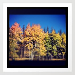 Aspen Leaves in Colorado Art Print