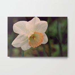 Rainy Day Daffodil Metal Print