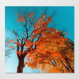 Autumn Cyan Canvas Print