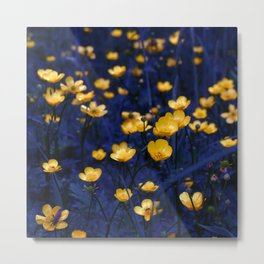 a sea of buttercups Metal Print