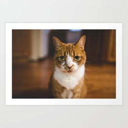 The Cat. Art Print