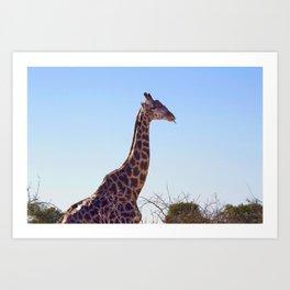 Giraffe Doobie Art Print