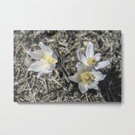 Primrose Path Metal Print