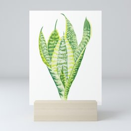 Mother-in-Law's Tongue Plant (watercolour) Mini Art Print