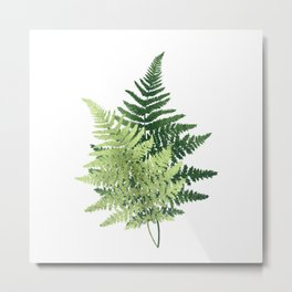Summer Forest Ferns Metal Print