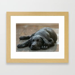 Labrador dog in the rain ! Framed Art Print