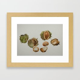 Spiky conkers Framed Art Print