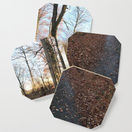 Forest in the Fall Coaster