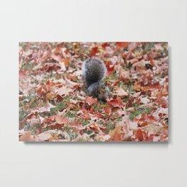 Fall Squirrel Metal Print