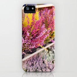 shelves with blooming heather iPhone Case