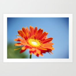Flower in the Sun Art Print
