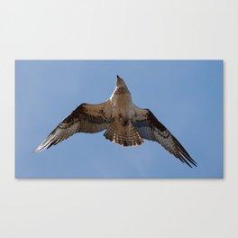 Dizzy Flight Canvas Print