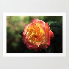 Rose 2599 Art Print