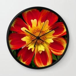 Sunburst Zinnia Wall Clock