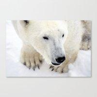 polar bear Canvas Prints featuring Polar Bear by MVision Photography