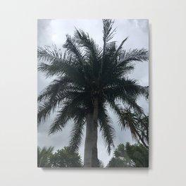Messico palme Metal Print