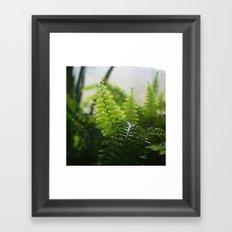 Photosynthesis Framed Art Print