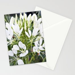 WHITE MAGIC BLOSSOMS Stationery Cards