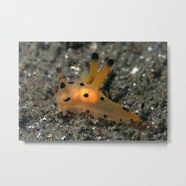 Thecacera pacifica (Pika nudibranch) inner glow Metal Print