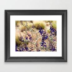 Blue Desert Lupine Framed Art Print