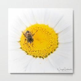 A bee on a daisy Metal Print