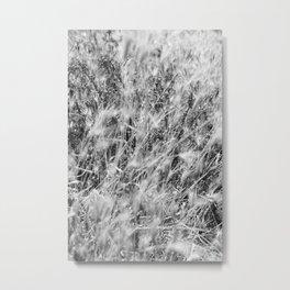 Black & White Autumn Grass Metal Print