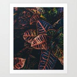 Ohh Art Print